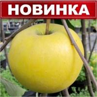 Саджанець яблуні Богемія