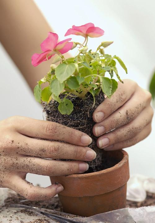 Выращивание комнатные растения 45